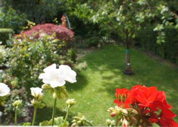 Blume Garten