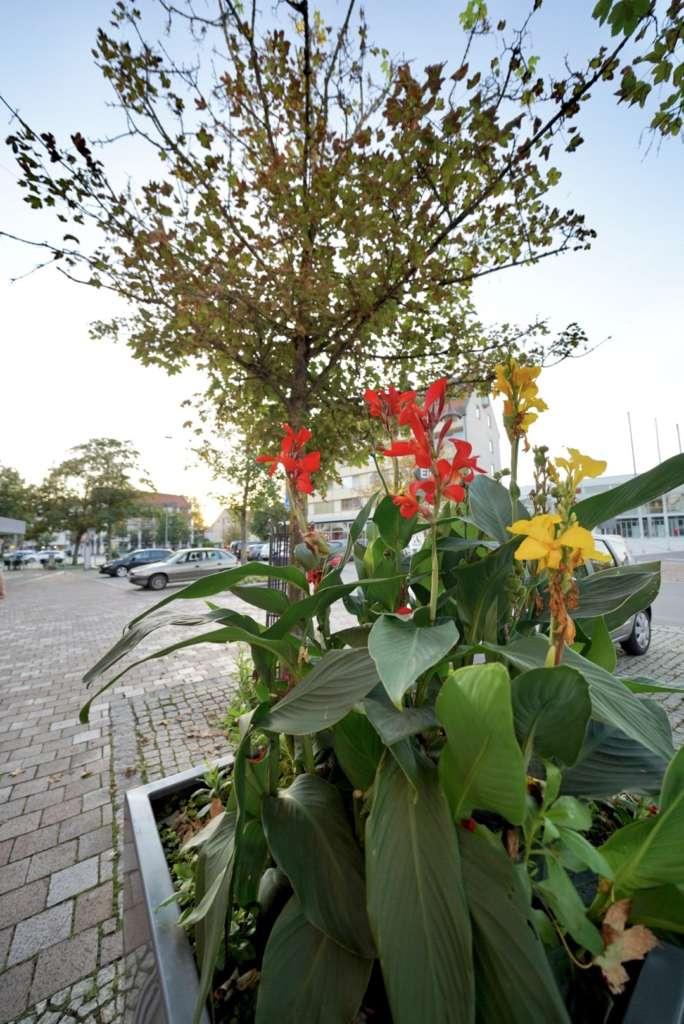 Stadtmitte Senden Pflanzen